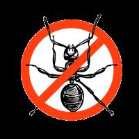 disinfestazione-formiche